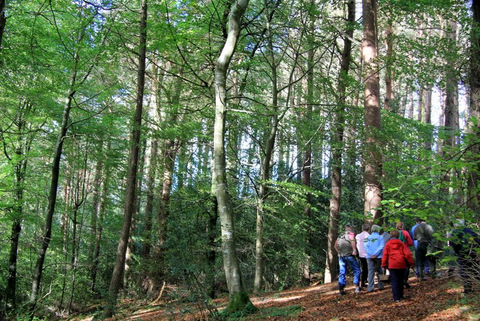 forest Ireland: photo by Cathy Fitzgera;d 2011