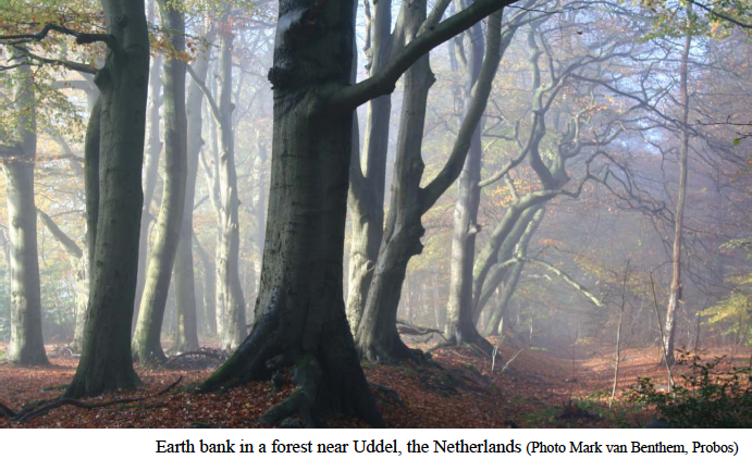 Netherland forest