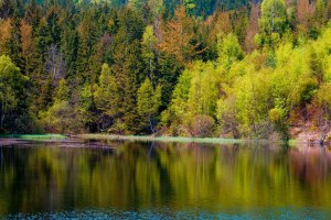 Forest-and-lake-in-Czech-Republic