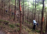 Conference attendees tree-marking for permanent, continuous cover forests
