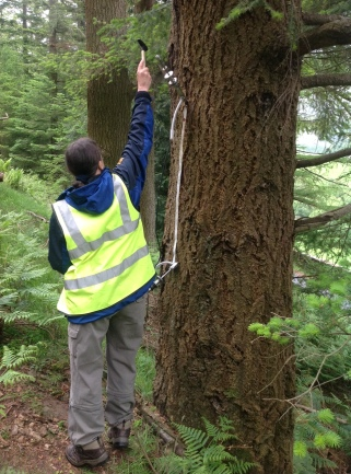 Two ways of testing for timber density 1) for standing timber - measuring the rate of sound travel across a measured distance up the tree trunk.
