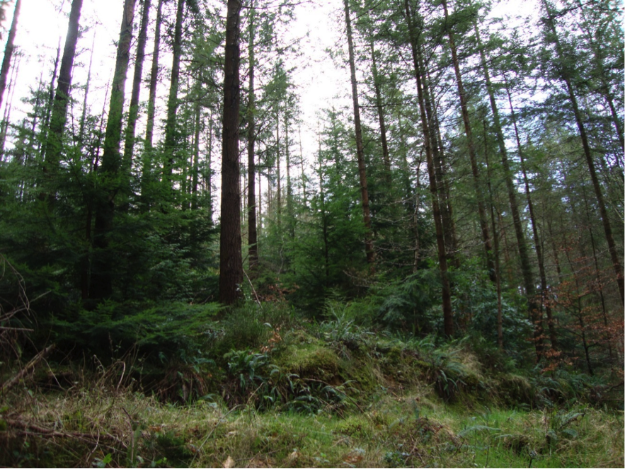 Liquidating the forests of ireland