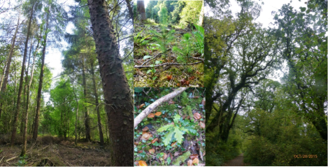 Pro Silva Ireland field day- Saturday 8th October 2016 Raheen Forest, Tuamgreany, East Clare andAGM
