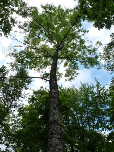 April Field Day, Study Tour and Good News for Continuous Cover Forestry –CCF