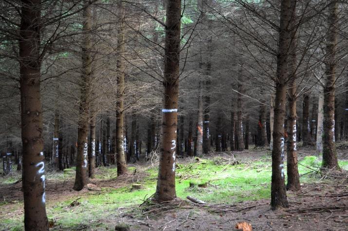 Ballycullen_Ted TranSSFor - Grad Density Thinning - Q Tree + Emerging Gap